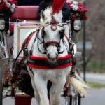 Profile picture of Central Park Carriage Tours
